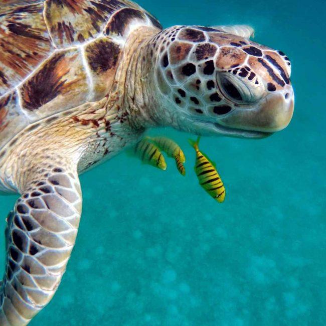 maldiv-water-1