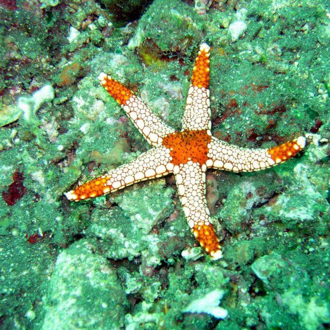 ocean-maldives